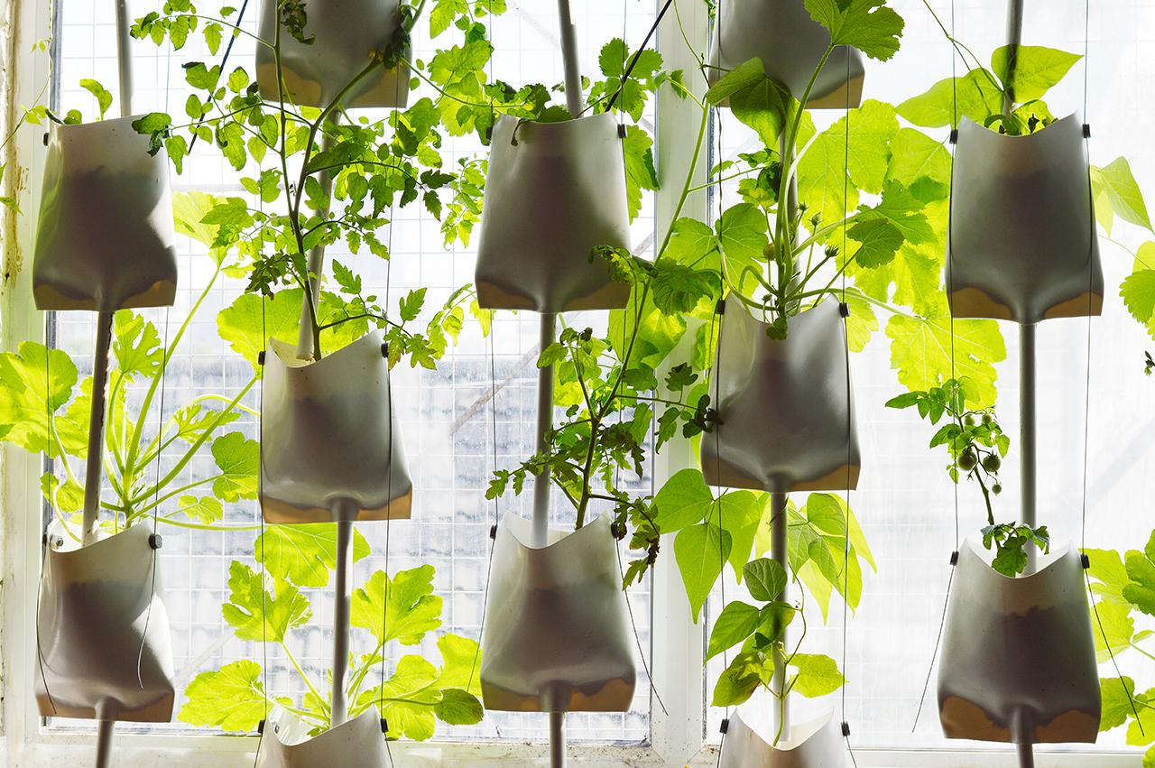 close up of hydroponic sacks in a window with plants growing out of them